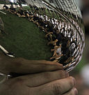 A picture of the Lombardi trophy. By English: Cpl. Michael V. Walters [Public domain], via Wikimedia Commons