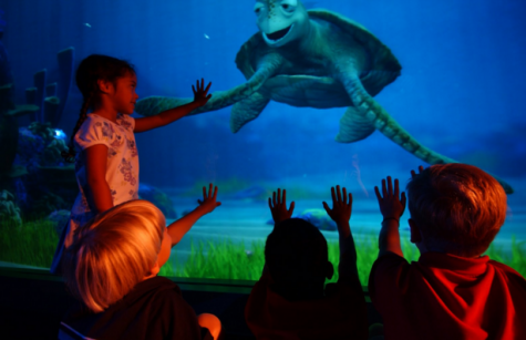 Turtle Talk With Crush is being advertised on Disney brochures as well, coming in April.