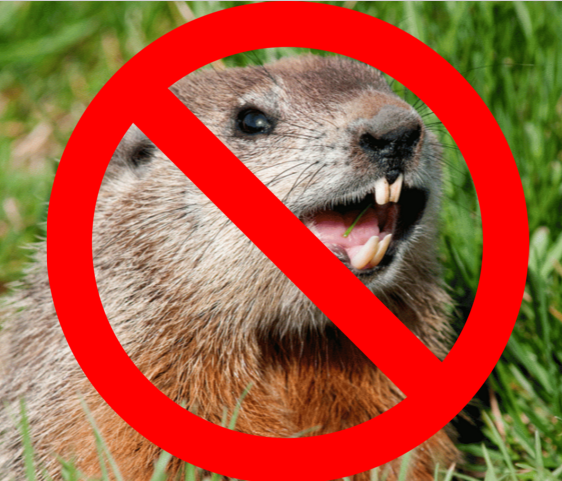 Happy Pest Day... I mean, Groundhog's Day