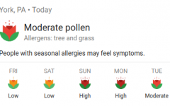 Record Pollen Counts Cause Allergy Suffering for Many