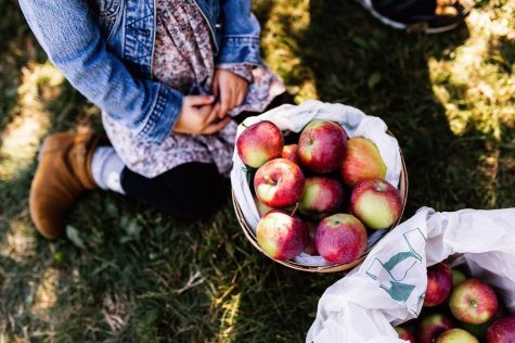 A Must-Do Fall Activity: Apple Picking