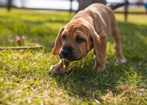 The Pros and Cons of Fostering Dogs
