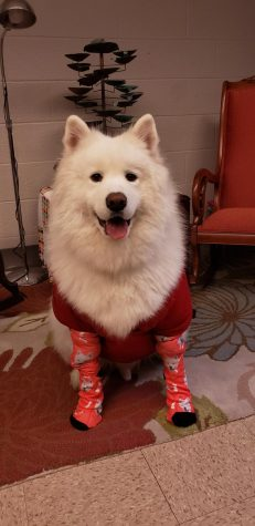Bodhi shows off his socks in support for the Sock Drive