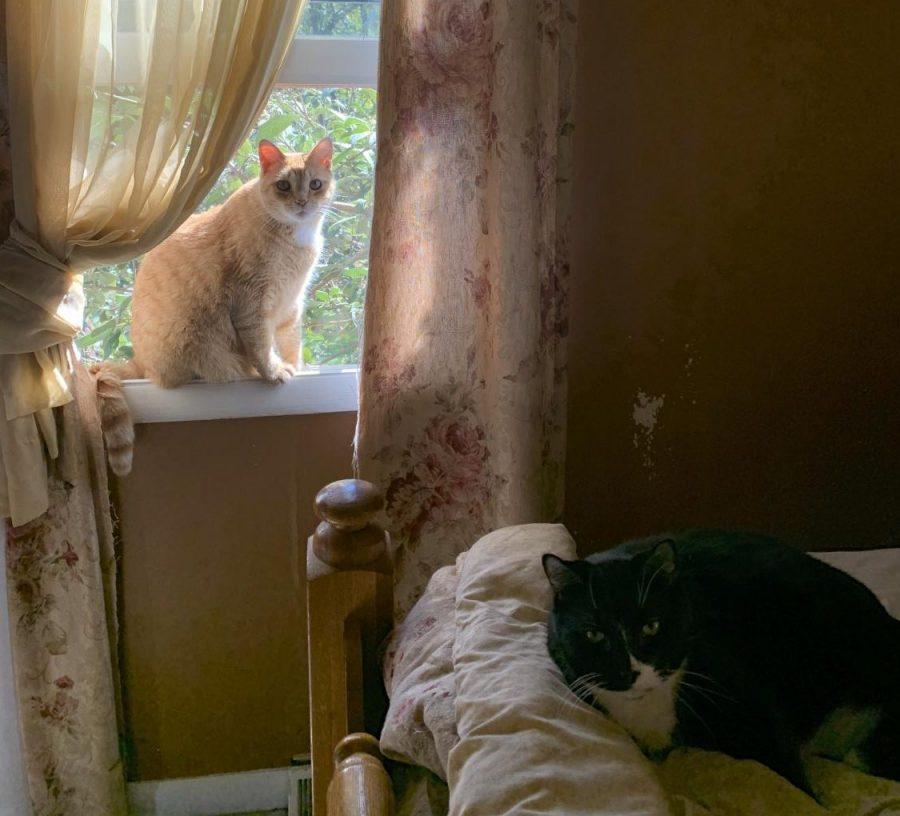 Senior Julianna Kessler's two cats chill out. Photograph by Julianna Kessler